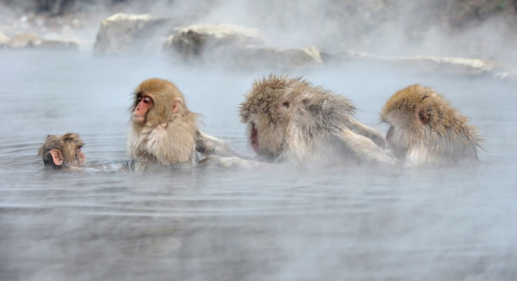TOPSHOTS-JAPAN-LIFESTYLE-TOURISM-ANIMALS